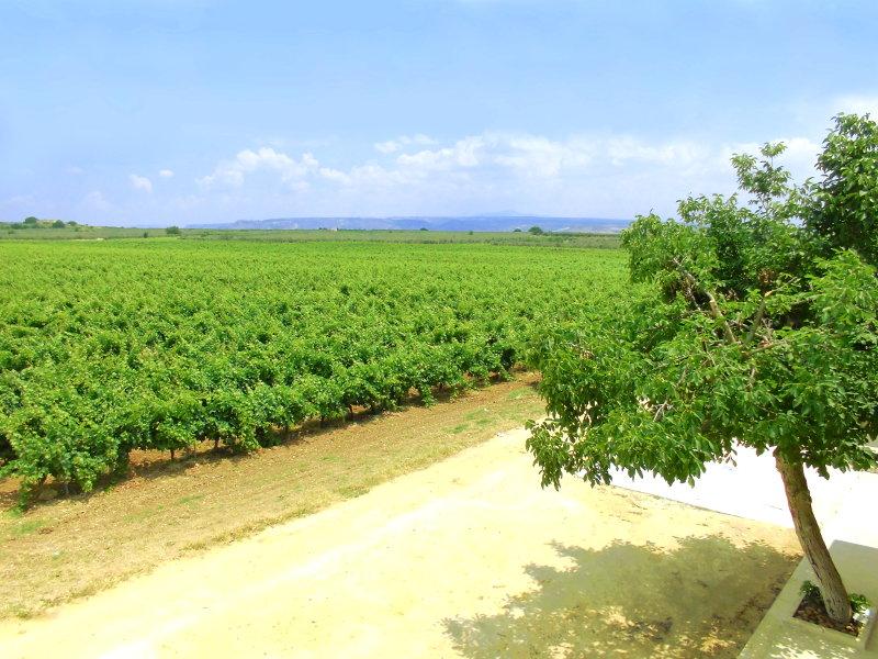 Selinunte casa vacanze<br>Dimora nella Tenuta - Relax tra vigne e ulivi